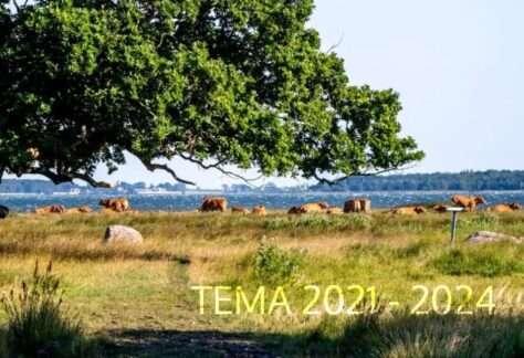 TEMA-21-24red.jpg